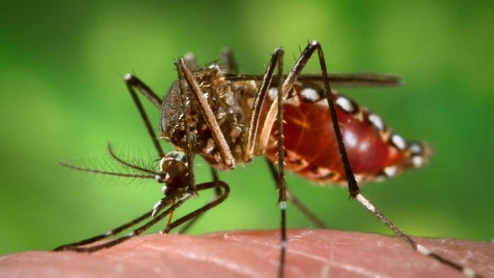 Средства от комаров: обзор популярных и советы по выбору