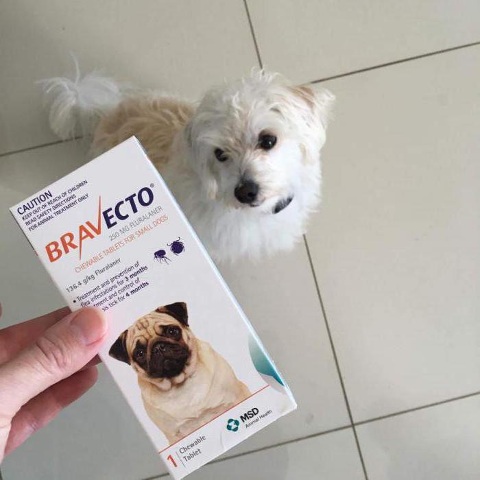 Таблетки Бравекто и собака