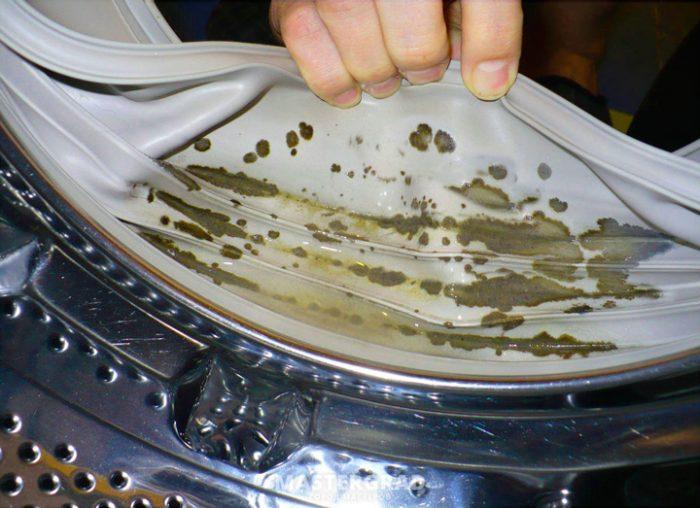 Плесень внутри стиральной машины
