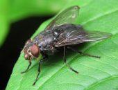 мухи на листочке