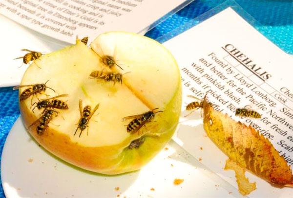 Яблоко в осах на листе бумаги