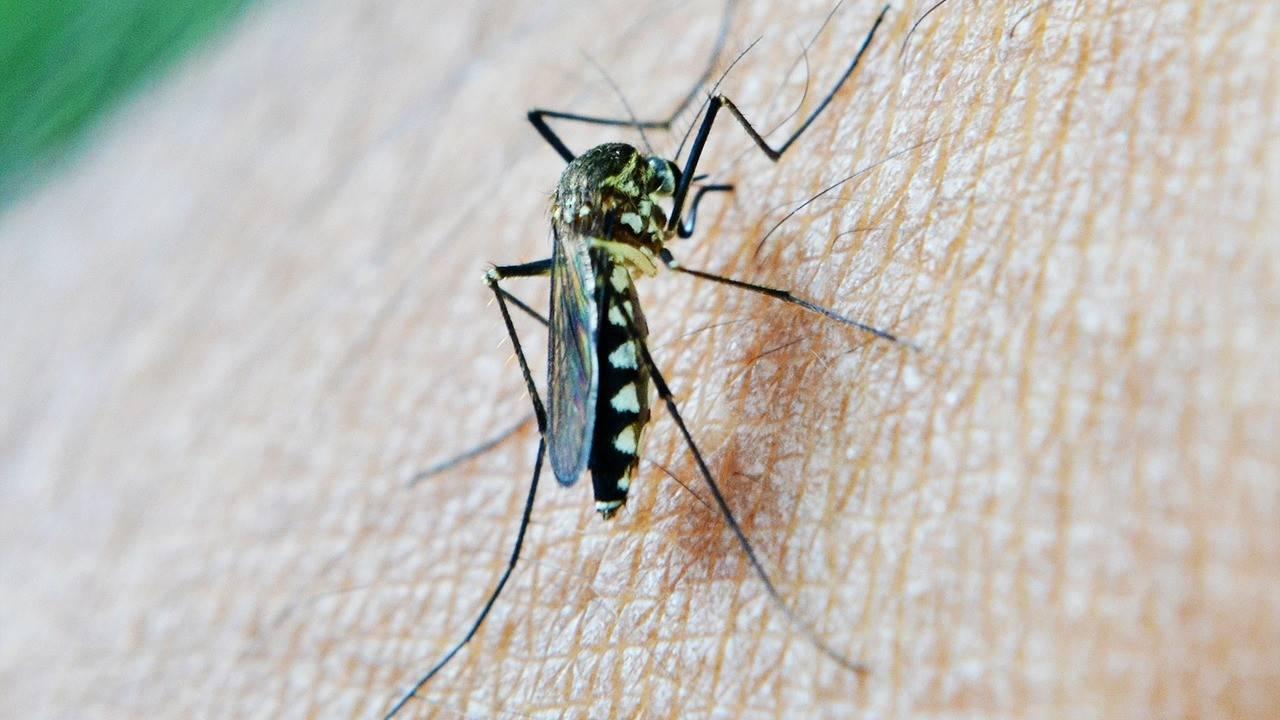 Комары, руки прочь от ребёнка: лучшие средства от назойливых вредителей