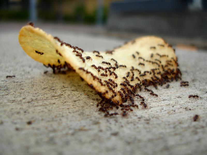 Обзор эффективных средств от муравьев и методов борьбы с ними в квартире