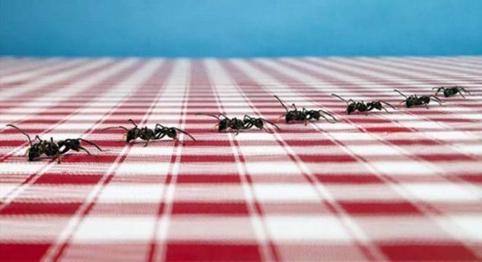Колонии муравьёв