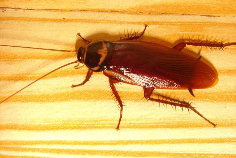 Обзор средств «Комбат» от тараканов