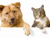 Средства Барс для кошек и собак