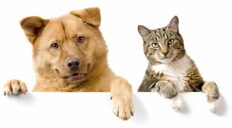Средства Барс для борьбы с блохами у собак и кошек