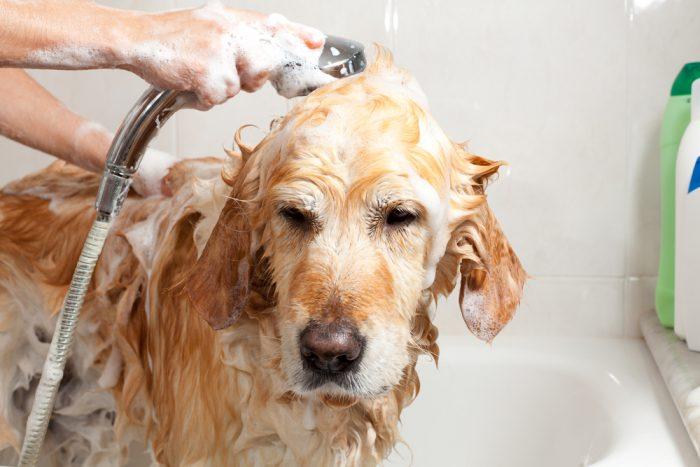 Моют собаку