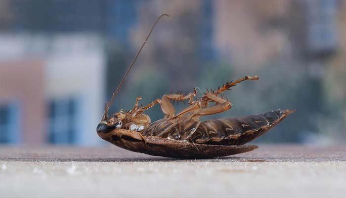 Мёртвый таракан