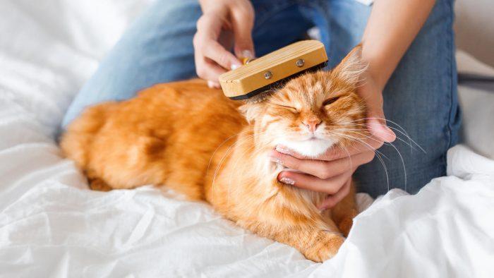 Расчёсывание кота