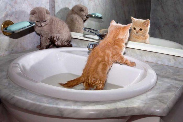 Котята в раковине