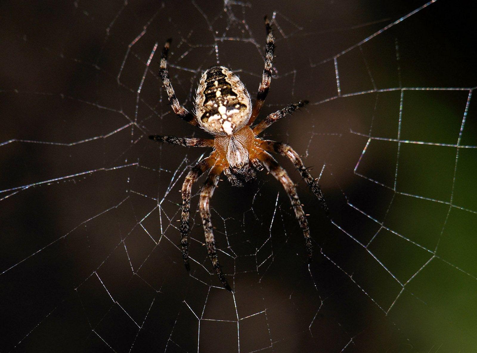 Нежелательные гости в доме — пауки: как избавиться и больше не допускать