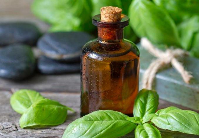 Эфирное масло базилика