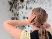 Стены без плесени