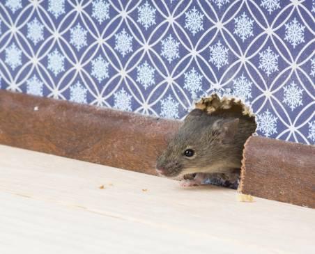 Мышиный лаз