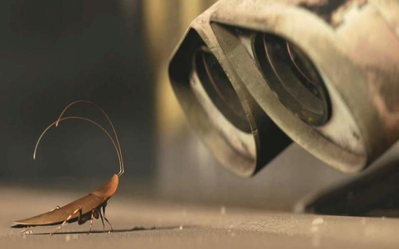 Обзор средств от тараканов торговой марки Раптор
