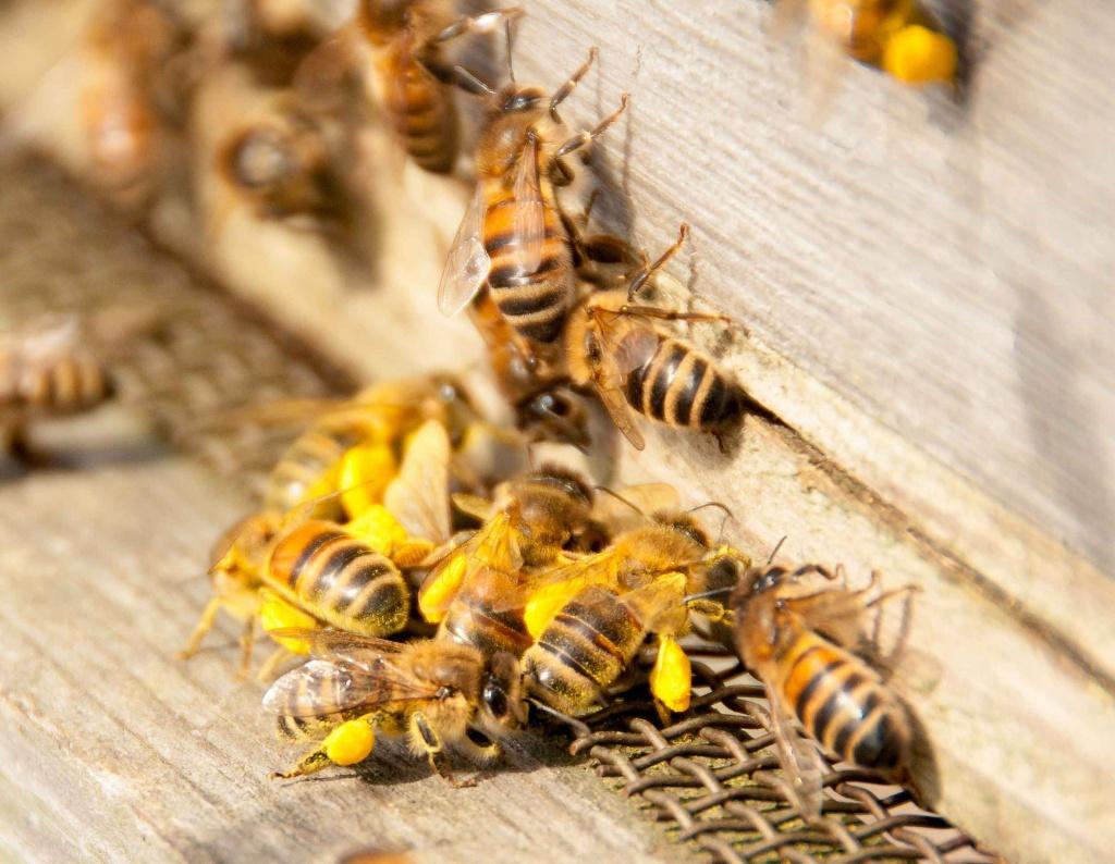 Как избавиться от пчел под крышей