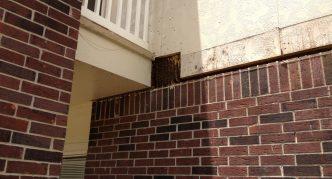 Пчёлы в стене дома