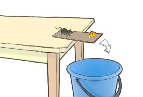 ловушка с ведром и мышь, которая пытается взять сыр (рисунок)