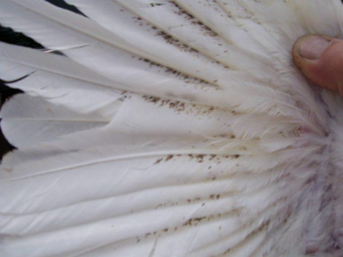 Промежутки между перьями