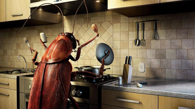 Как выбрать ловушку для тараканов или сделать своими руками