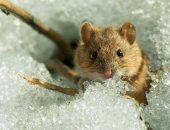 мыши в саду