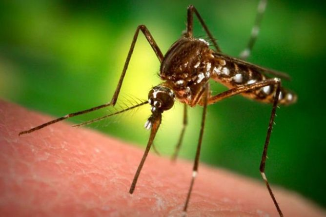 Комар на коже человека