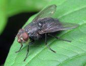 агита мухи