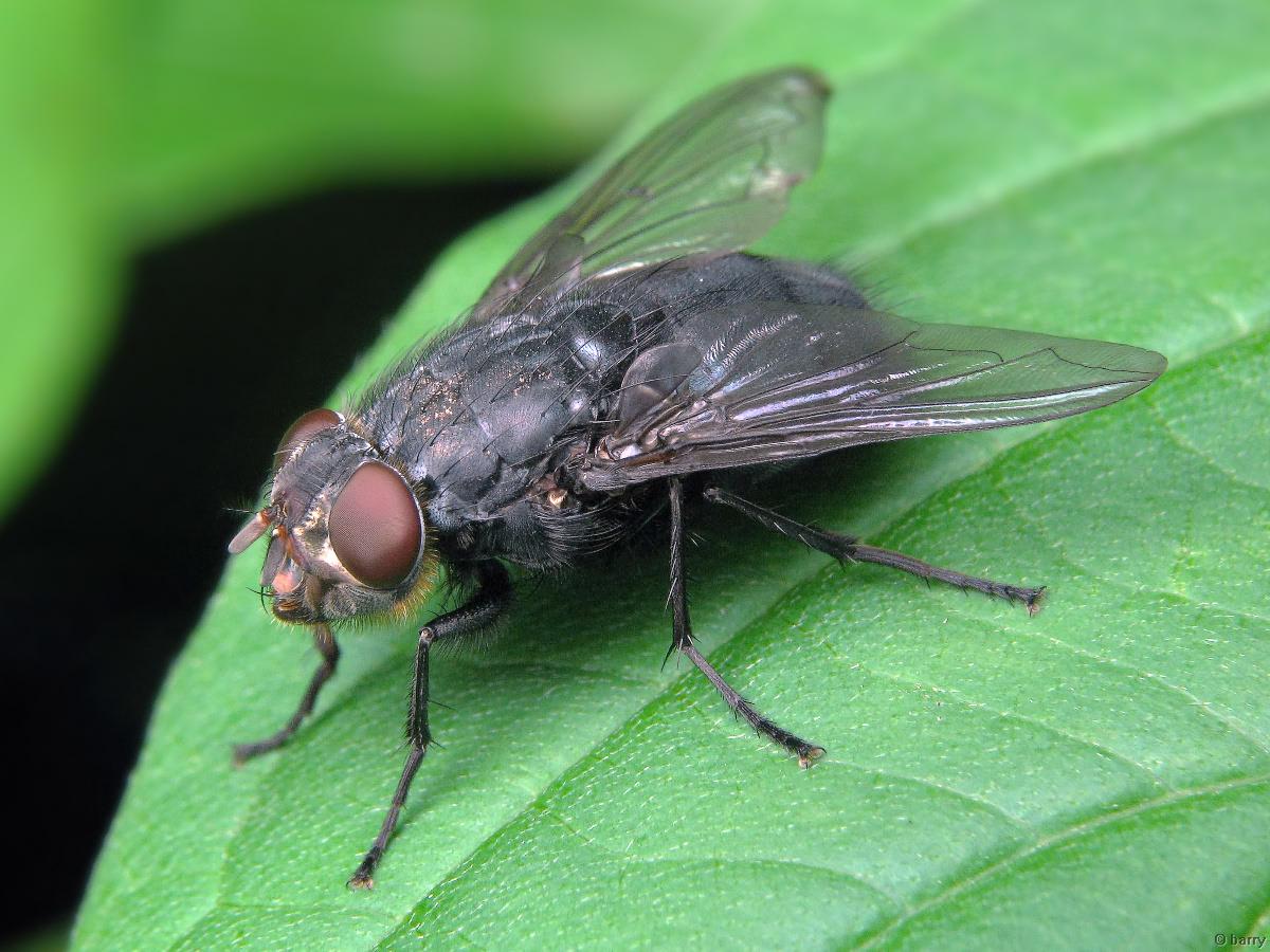 Агита от мух: принцип действия, инструкция, меры предосторожности