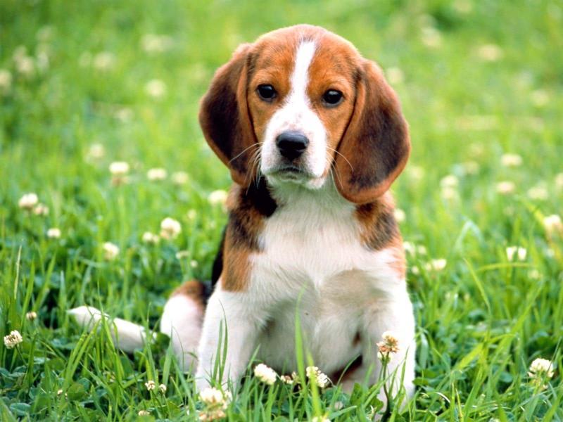 Как защитить собаку от клещей: народные средства