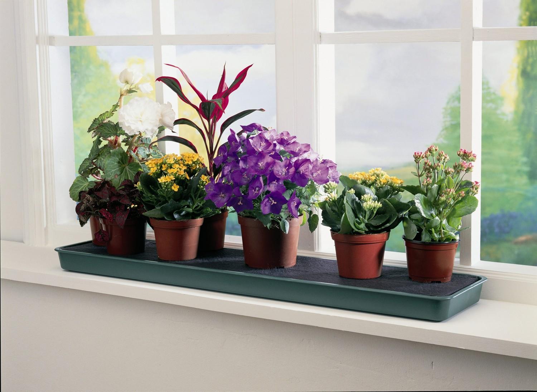 Мошки на комнатных растениях: способы борьбы и меры профилактики