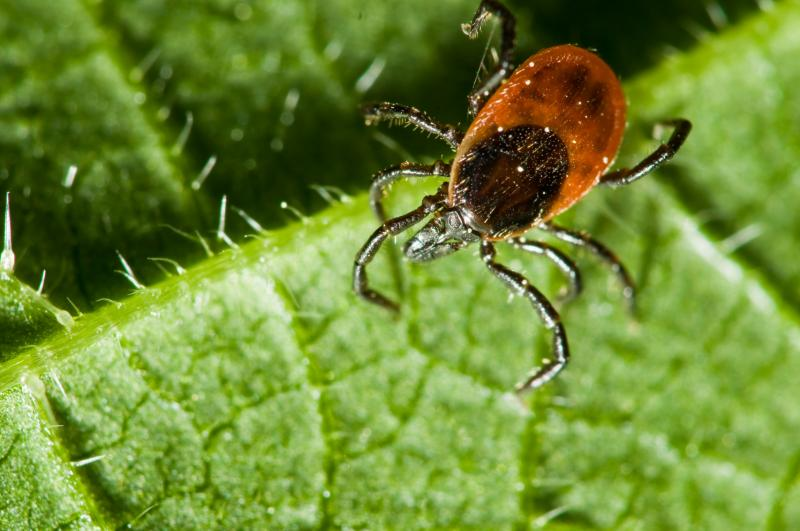 Таежный клещ: чем опасен, как защититься от укусов?