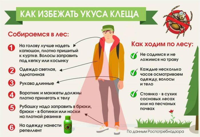 Что надеть и как ходить по лесу