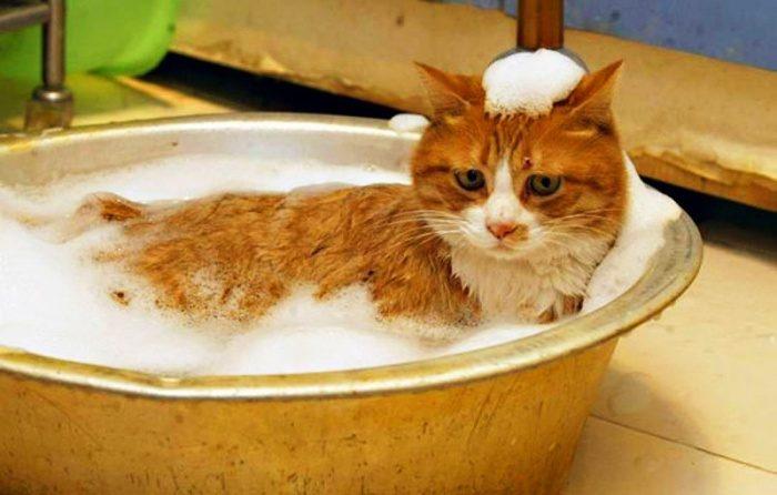 Рыжий кот лежит в пене в миске