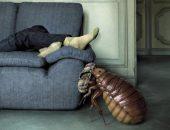 Клопы уже подбираются к вашему дивану