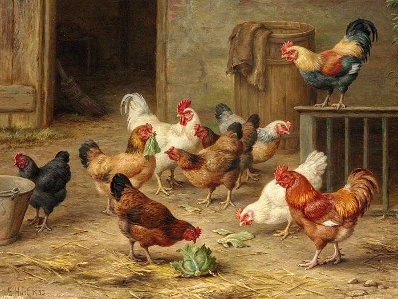 Куриные блохи и как от них избавиться: как вывести народными средствами, чем обработать сарай, лекарства против блох, профилактика, фото