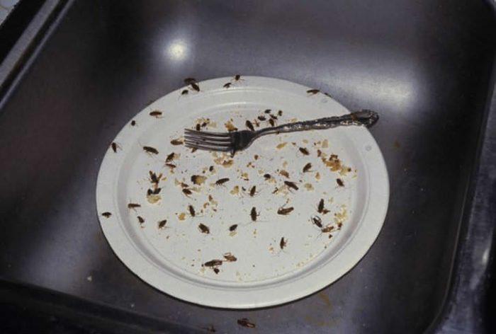 Тарелка с остатками пищи и тараканами