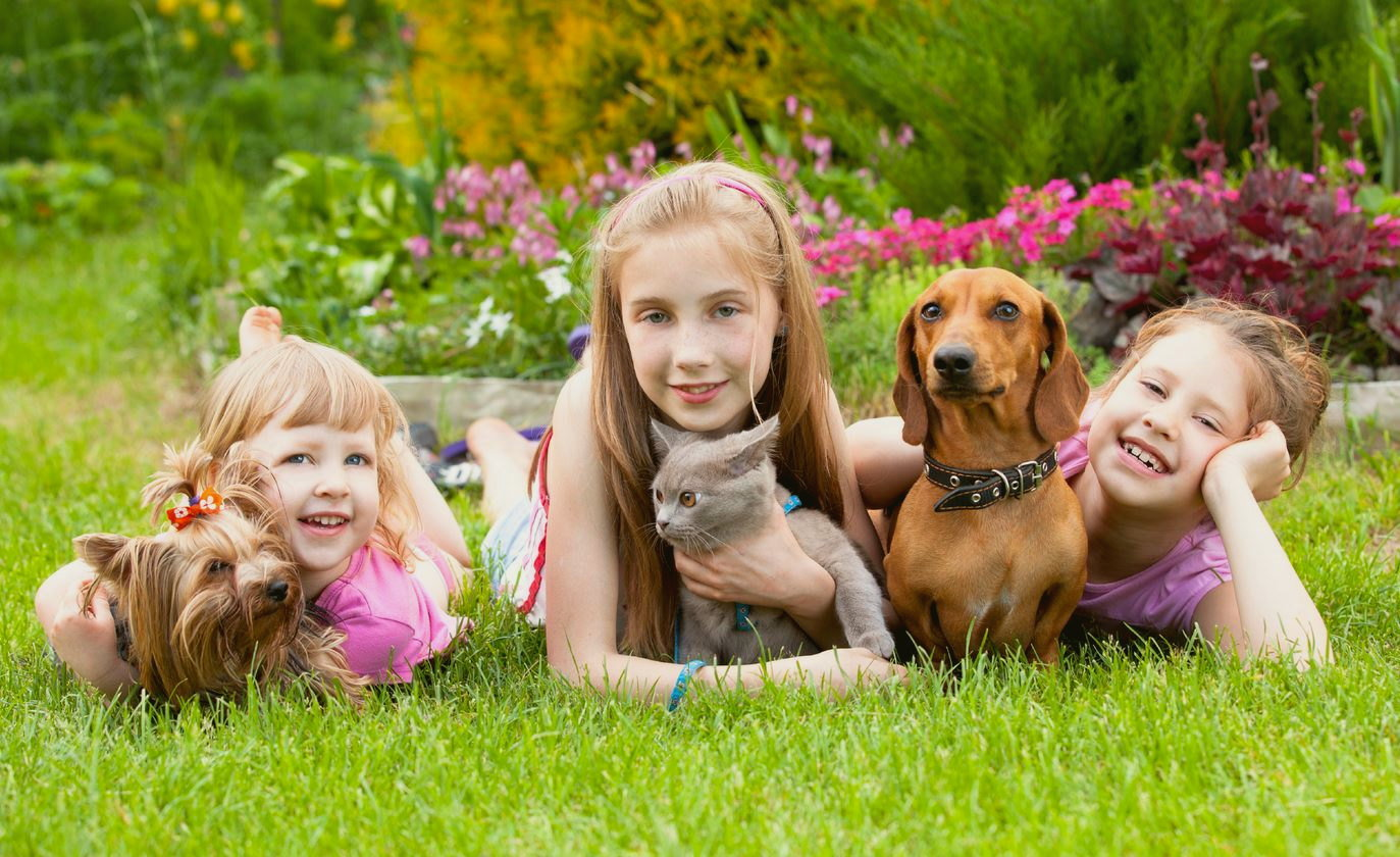 Ультразвуковой отпугиватель клещей для людей и собак: принцип работы и обзор популярных моделей