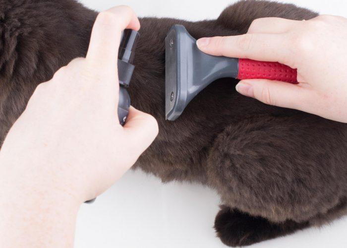 Человек вычёсывает блох гребнем из шерсти кошки