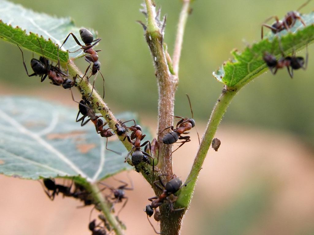 Как избавиться от муравьёв в теплицах и парниках: обзор популярных методов
