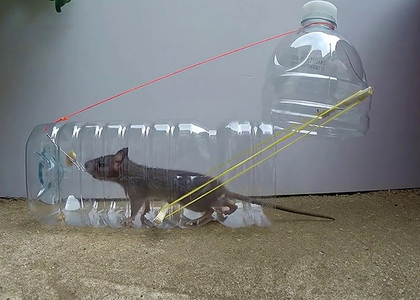 Крысоловка из бутылки