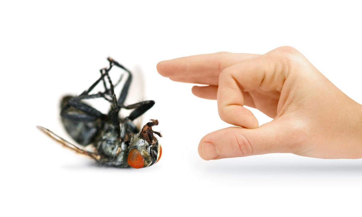 Комнатные мухи — какой от них вред и как бороться с надоедливыми насекомыми