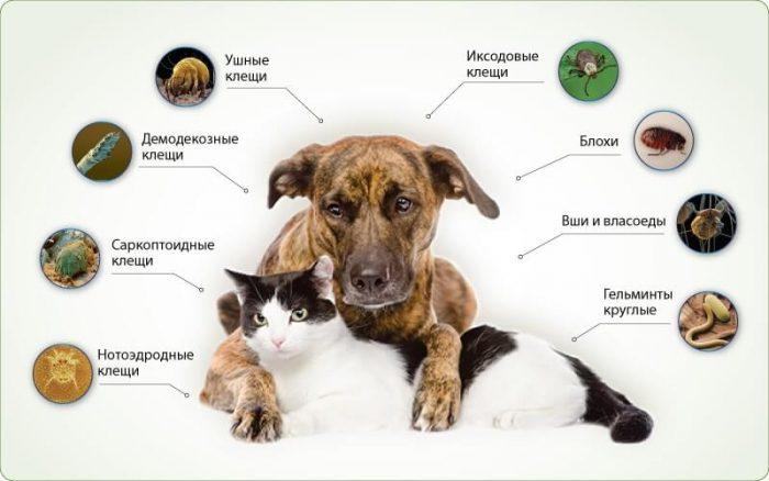 Паразиты домашних животных