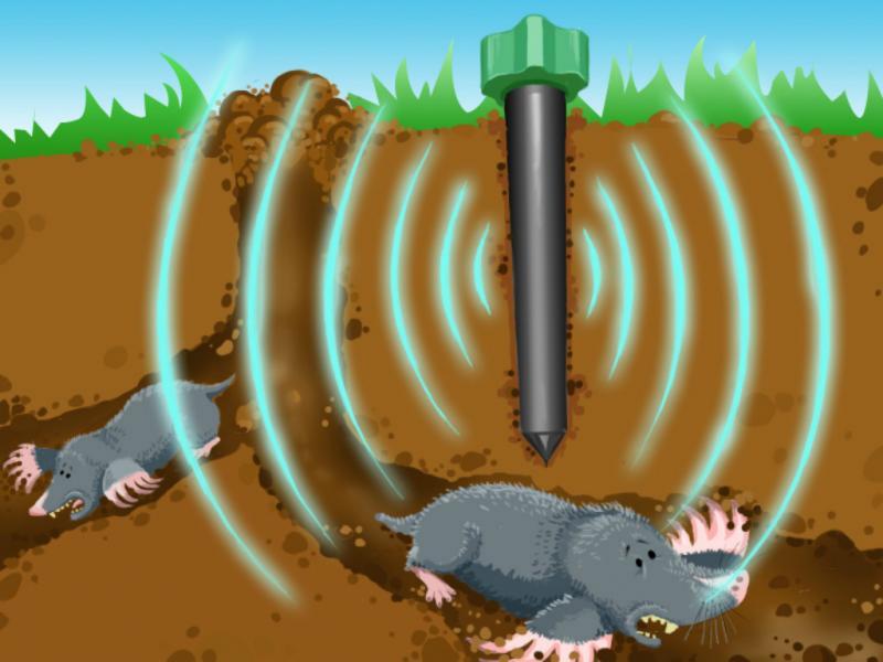 Ультразвуковой отпугиватель: гуманный способ избавления от кротов
