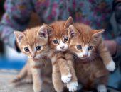 Три котёнка в руках