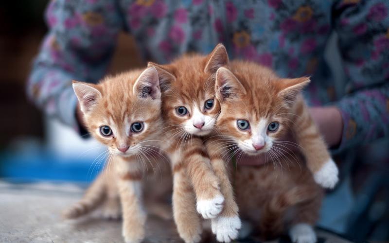 Как безопасно вывести блох у котёнка в домашних условиях