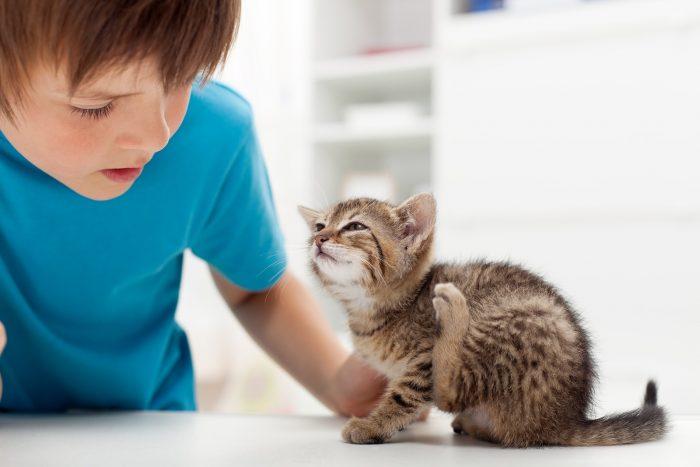 Мальчик и котёнок