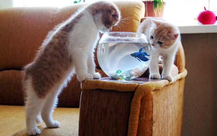 Два котёнка и аквариум
