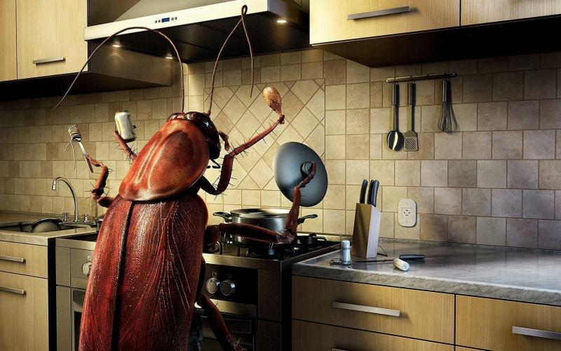 Как избавиться от всевозможных насекомых за один раз