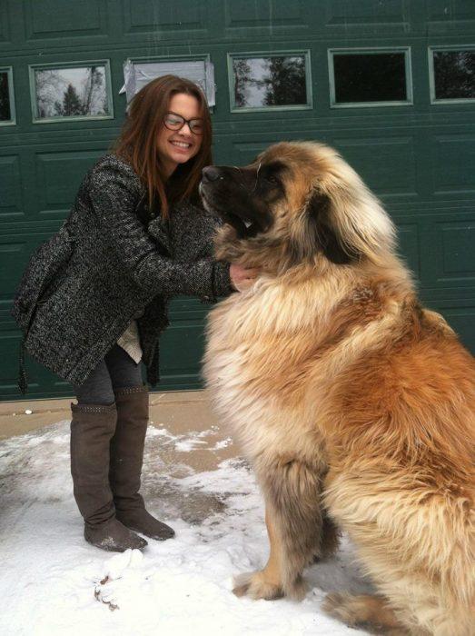 Девушка гладит огромную собаку